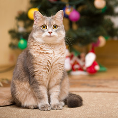 Smiling cat on a blurry background with a Christmas tree and a luminous garland.