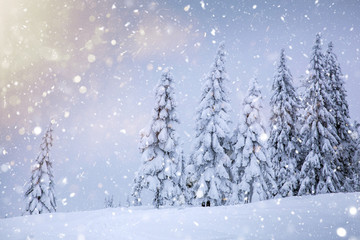 Scenic winter landscape with snowy fir trees and small cottage.