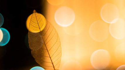 Transparent skeleton leaf with beautiful texture on a bright glowing and gold bokeh abstract background,  Bright expressive artistic image nature, free space