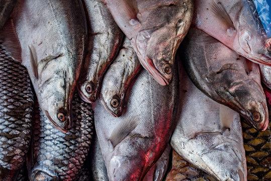 Fish at the market, Luang Prabang, Laos