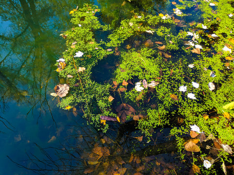 beautiful reflection in the water. green plants in the water. natural wallpaper.