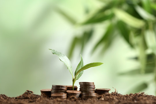 Stacked coins and young green plant on soil against blurred background, space for text