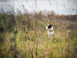 Hunting dog in the field among the tall grass Fotobehang