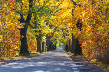 Canvas Prints Autumn forest road among colorful autumn trees