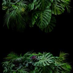 Wall Mural - Tropical leaves foliage rainforest plants bush floral arrangement nature frame backdrop on black background.