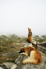 Two Dogs on the Rocks in Misty Day in Brazil