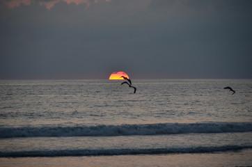 Fond de hotte en verre imprimé Dauphins Bird at sunset at ocean