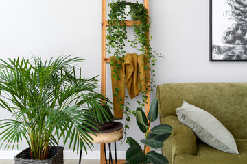 Wall Mural - Stylish interior of room with green houseplants