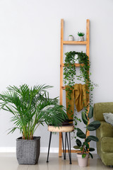 Stylish interior of room with green houseplants