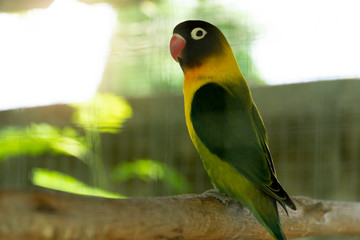 The bird then looked green, standing on a branch. And there is a blurry picture of the cage in the front.