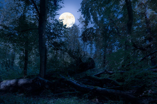 At night at full moon in the forest. There are fallen tree trunks in this natural forest and are romantically illuminated by the moonlight.