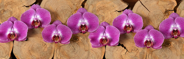 Still life with orchids and cross sections of a tree on a dark blue background