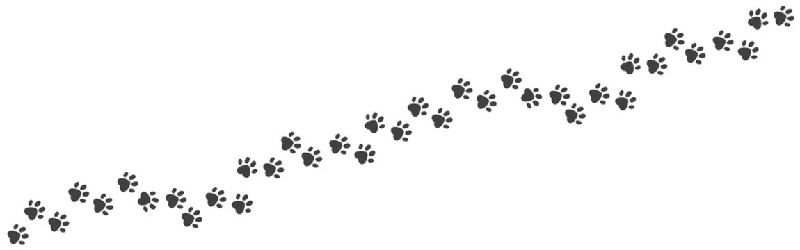 Paw foot trail. Cat and dog walk track silhouette, wild animal and pet paw print texture. Vector image puppy and kitten paw path black template on white backgrounds