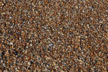 Muschelbank am Nordsee Strand