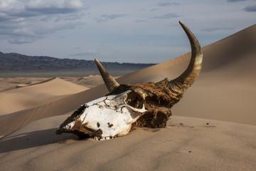 Bull skull in the sand desert at sunset. Death concept.
