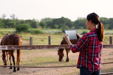 Farmer horse farm checking quality by tablet agriculture modern technology Concept.