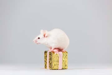 The mouse is a symbol of the new year 2020. A white mouse sits on a golden gift box on a white background. New Year and Christmas concept. Copy space banner