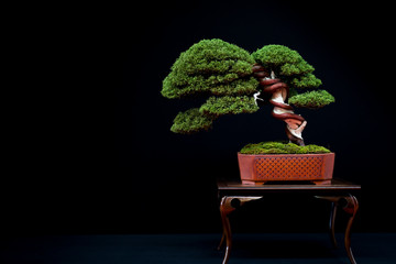 Foto op Canvas Bonsai Bonsai 14