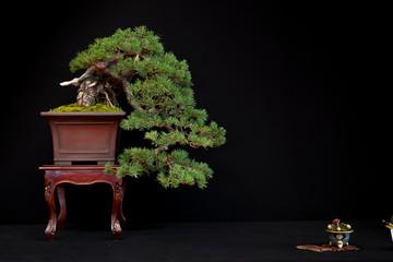 Foto auf Acrylglas Bonsai Bonsai 9