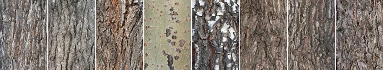 Tree bark textures collection close up background.