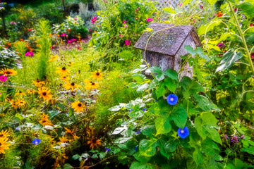 Morning Glories and Flowers with Birdhouse
