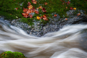In de dag Bos rivier Rainforest Creek During the Autumnal Season. Red and yellow leaves dot the landscape along a creek in the Mt. Baker National Forest. The