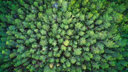 Aerial top view of autumn trees in wild park in september web banner fly drone