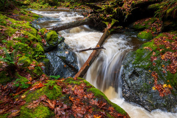Foto op Aluminium Bos rivier Rainforest Creek During the Autumnal Season. Red and yellow leaves dot the landscape along a creek in the Mt. Baker National Forest. The