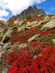 Stores à enrouleur Rouge mauve Massif des Aiguilles rouges, Alpes françaises