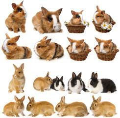 Papiers peints Squirrel rabbits - set , collection