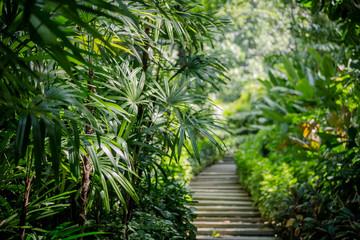 Foto op Plexiglas Palm boom palm trees in the garden