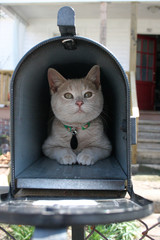 adorable cute tiny proud kitten in a mailbox