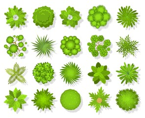 Top view trees and bushes. Aerial landscape elements. Forest and tropical tree, green park bush map icons look from above vector set