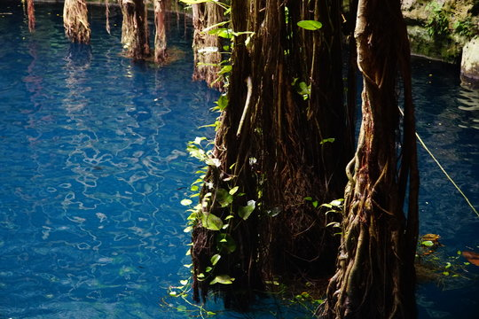 Cenote Oxman Hacienda San Lorenzo