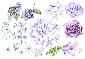Watercolor Set with violet and purple roses and fllowers, blueberries and berries.