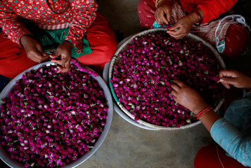 Women work to make garland from the globe amaranth flowers, before selling them to the market for the Tihar festival, also called Diwali, in Bhaktapur