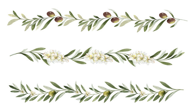 Watercolor vector set of borders of olive branches and flowers.