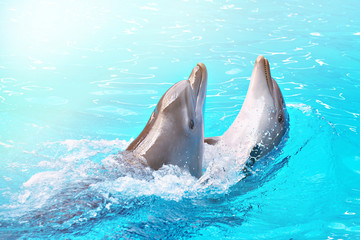 Photo sur Aluminium Dauphins Dolphins dancing into pool on circus show