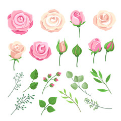 Rose elements. Pink and white roses flowers with green leaves and buds. Watercolor floral romantic wedding decor. Isolated vector set. Illustration blooming rose blossom, wedding watercolor twig