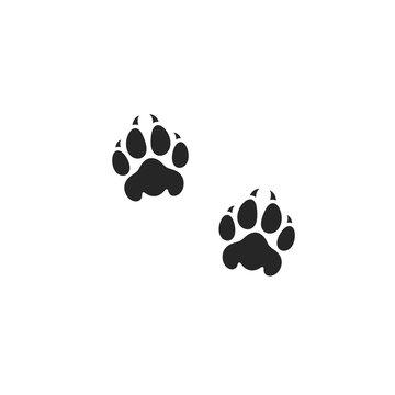 Lion paw print. Wild animal
