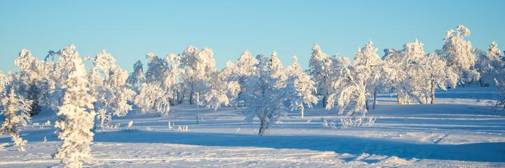 Wall Mural - Snowy landscape, frozen trees in winter in Saariselka, panoramic winter background, Lapland, Finland