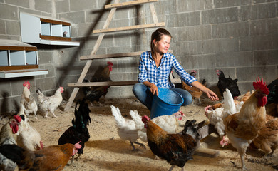 Young woman feeding hens in a chicken coop