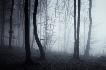 Poster de jardin Foret dark mysterious woods, trees in fog in fantasy forest