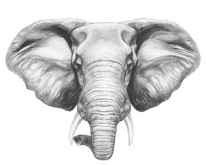 Por trait of Elephant. Hand-drawn illustration. Vector isolated elements.