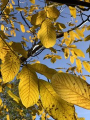 Beautiful beech canopy in park