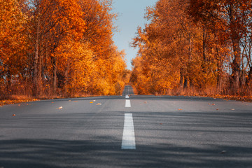 Papiers peints Automne Empty asphalt road in autumn forest. Autumnal background