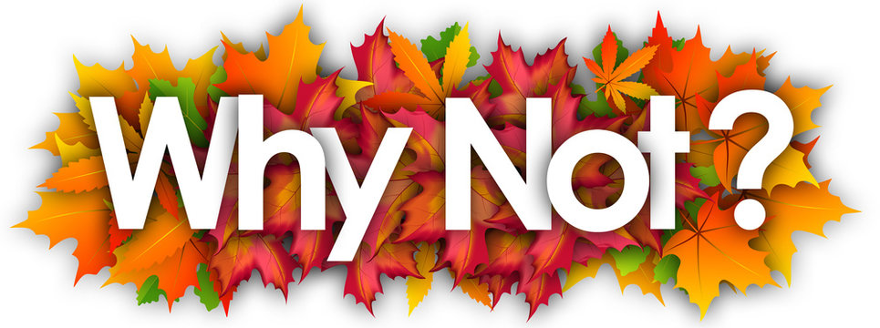 Why Not  word and autumn leaves background