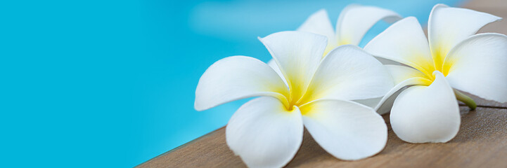 Photo sur Plexiglas Frangipanni White plumeria flowers by the pool. Banner image