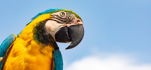 Zelfklevend Fotobehang Papegaai Papagai am California Lighthouse auf Aruba