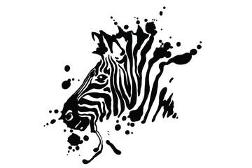 Fototapeta Zebra isolated on white background. Vector grunge illustration design template.